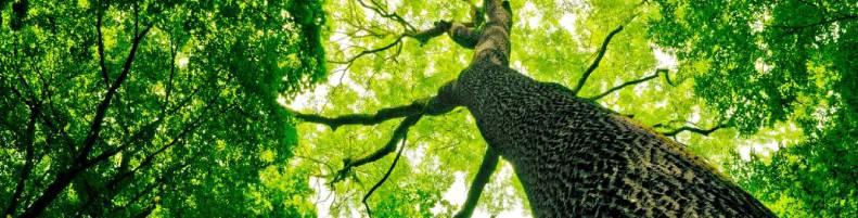 ESG: Copas de árvores.