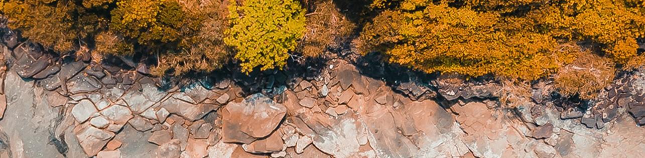Economia e Mercado: Vista aérea de uma vegetação com diversos tons de cores.